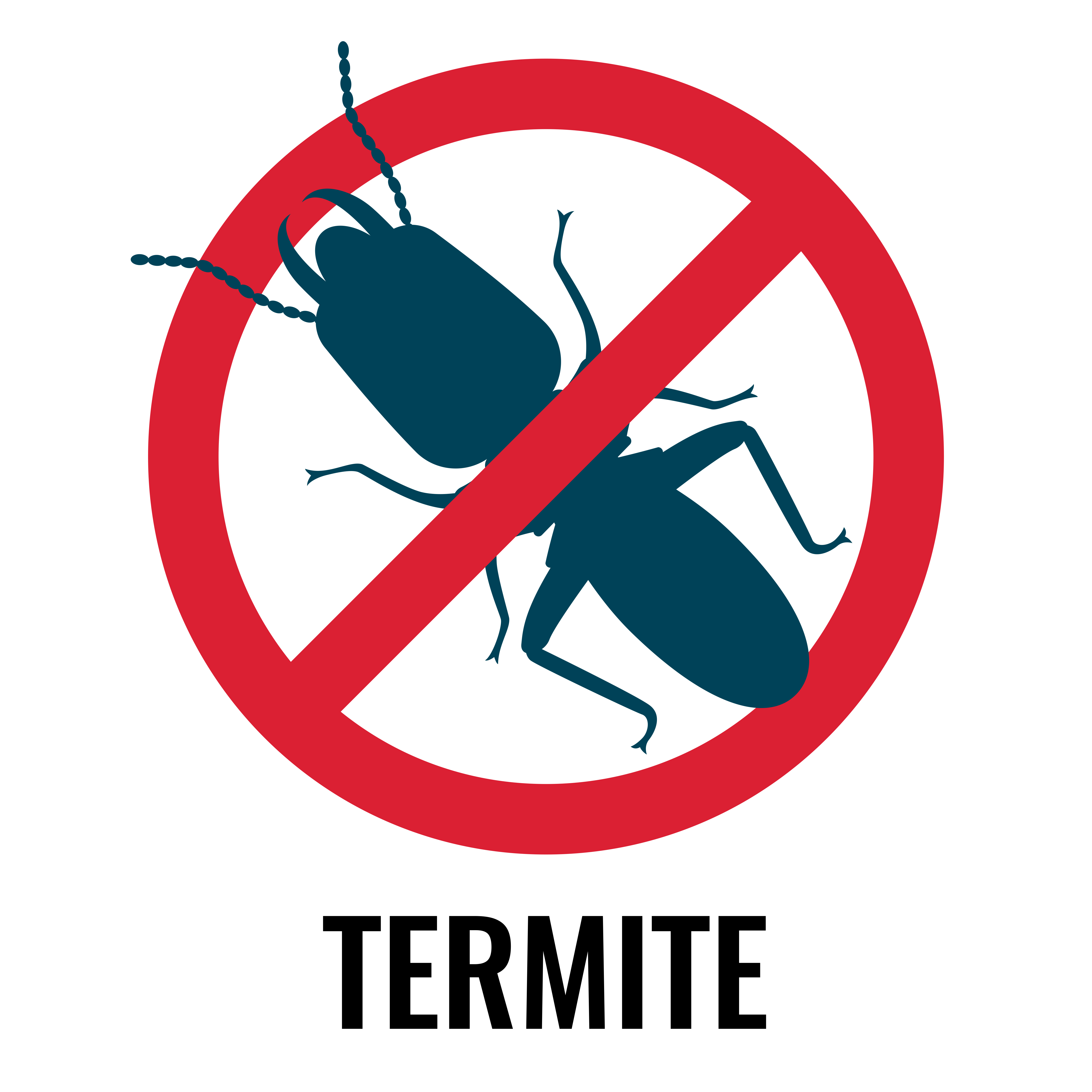How Termites Get In Your Home