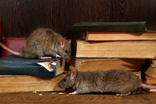 Preventative Rodent Control with H&H Pest Control