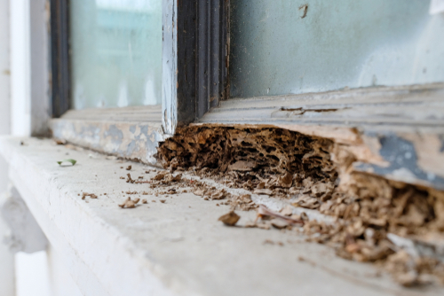 H&H Pest Control and Waterproofing Termite Control