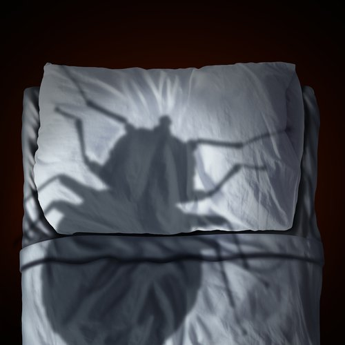 Sleep Tight: How to Protect Your Home from Bed Bugs