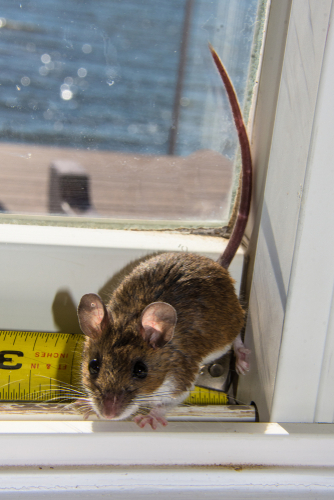 H&H Pest Control and Waterproofing Rodent Control