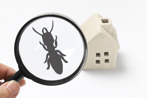Termite Damage: Is My Home At Risk?